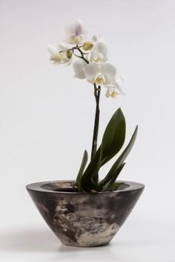 Une orchidée magnifiée par l'artisanat (Fournie par FL Photographie)