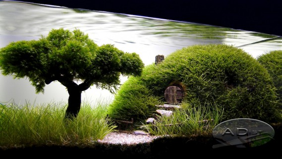 Internet regorge d'images inspirantes d'<i>aquascaping</i>, comme cette reproduction de maison de Hobbit.  (Tirée de www.aquascapingworld.com)