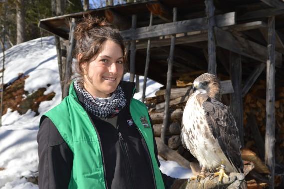 L'animatrice Audrey Pilon pose avec une buse à queue rousse, un oiseau de proie présent dans le parc. (Benoit Sabourin, LeDroit)