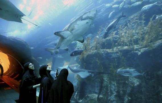 Des touristes admirent des requins dans un tunnel situé dans un centre commercial de Dubaï. (AFP, Ali Khalil)