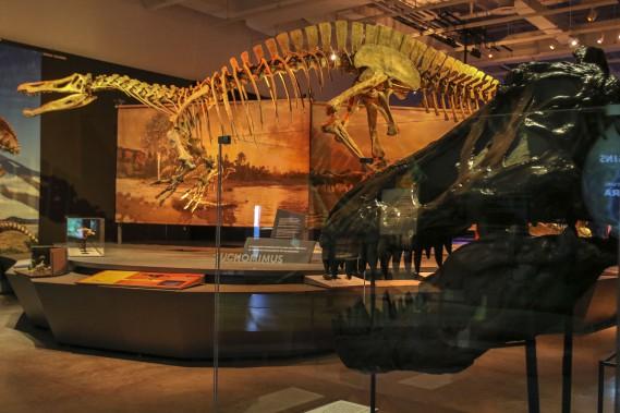 <em>Formidables dinosaures</em>met en vedette 16 squelettes complets, tout aussi impressionnants que certaines parties de la bête exposées séparément - crâne monumental, tibia démesuré... (Patrick Woodbury, LeDroit)