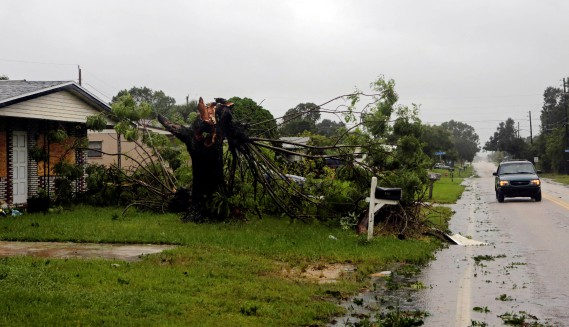 La tête d'un arbre a été arrachée lors du passage de l'ouragan <em>Matthew</em> à Melbourne, en Floride, le 7octobre. (Photo Henry Romero, REUTERS)