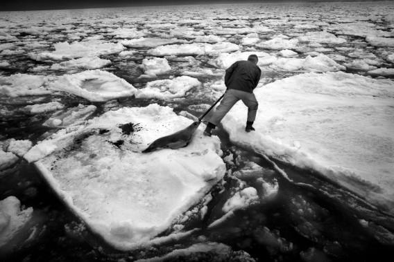 En optant pour le noir et blanc, le photographe affirme vouloir neutraliser le sensationnalisme propre au sang rouge sur la neige banche. (Photo courtoisie, Yoanis Menge)