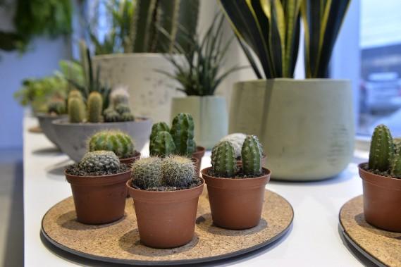 De petits cactus à de grandes plantes tropicales, l'offre se veut diversifiée. Les prix débutent à 10 $. (Le Soleil, Pascal Ratthé)