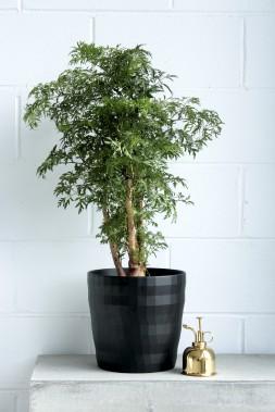 Outre les plantes, Folia Design vend des pots, des arrosoirs, des brumisateurs et des objets déco. (Fournie par Folia Design)