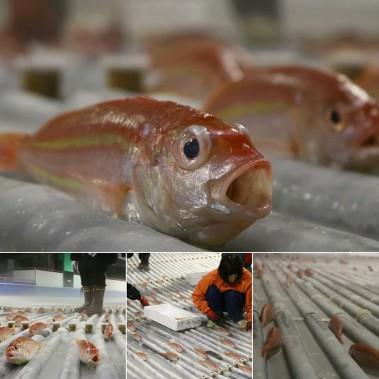 Des employés ont disposé 5000poissons morts, achetés au marché local, pour ensuite les ensevelir sous l'eau qui deviendra patinoire. (PHOTO SPACE WORLD/FACEBOOK)
