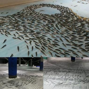 Certains poissons ont été placés pour former des bancs, d'autres pour former des flèches ou écrire «Hello». (PHOTO SPACE WORLD/FACEBOOK)