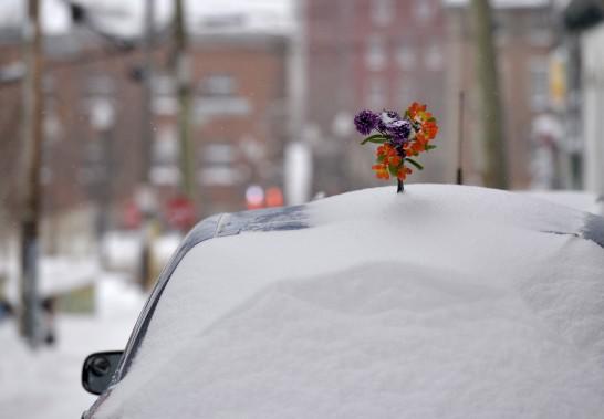 Un ou une automobiliste plus chanceux/euse a reçu un bouquet de fleurs en plus d'une belle séance de pelletage! (Le Soleil, Yan Doublet)