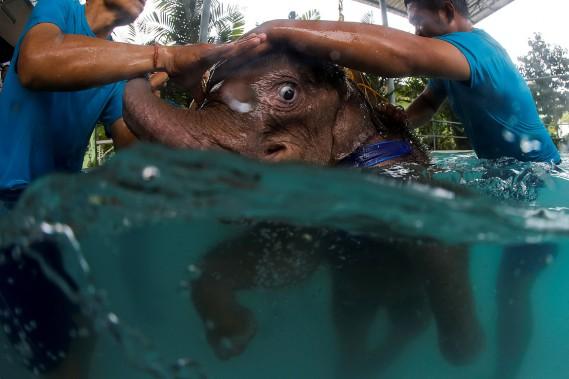 Orphelin, l'animal était en mauvais état quand les employés du zoo de la région l'ont accueilli. (REUTERS)