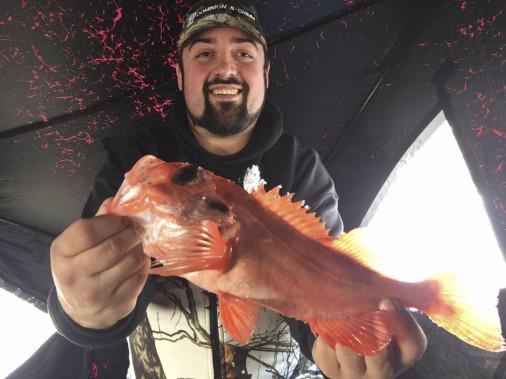 Maxime Claveau de Chicoutimi confie faire de belles pêches au large et les poissons de fond sont très abondants. (Photo courtoisie)