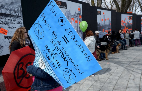 Ils étaient plus d'une centaine de propriétaires de chiens de toutes races réunis devant l'Assemblée nationale pour protester contre la loi 128. (Le Soleil, Erick Labbé)