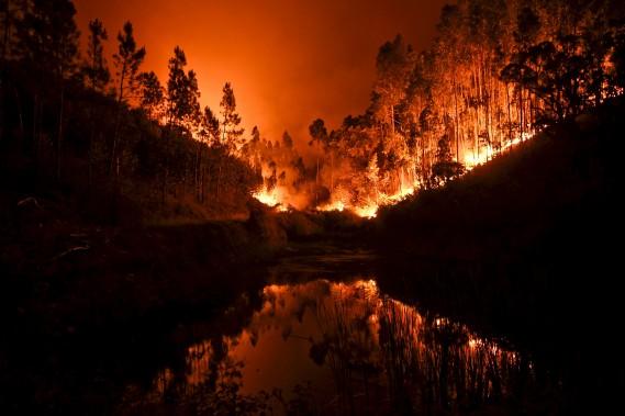 Un gigantesque feu de forêt ravageait toujours dimanche le centre du Portugal. (AFP, Patricia De Melo Moreira)