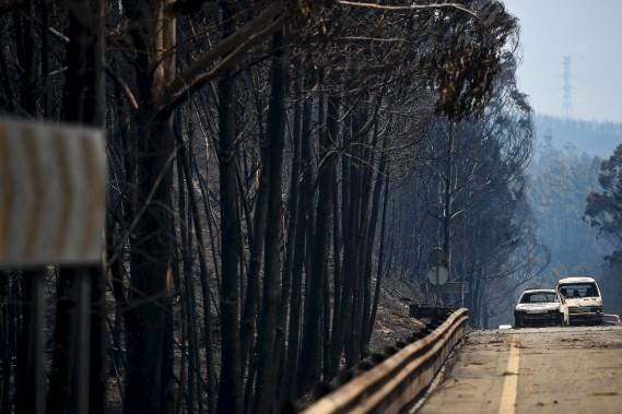 Des arbres et une voiture calcinés àFigueiro dos Vinhos, au centre du Portugal. (AFP, Patricia De Melo Moreira)