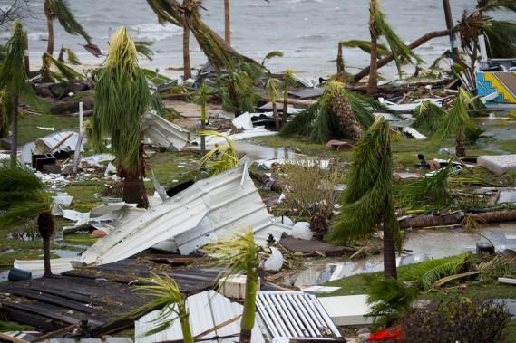 Les palmiers de l'hôtel Mercure à Marigot, sur l'île de Saint-Martin, ont eu la vie dure. (AFP, Lionel CHAMOISEAU)