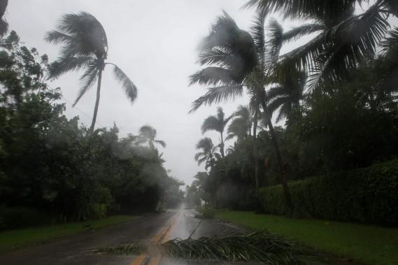Les palmiers étaient agités dimanche matin à Naples. (AFP)