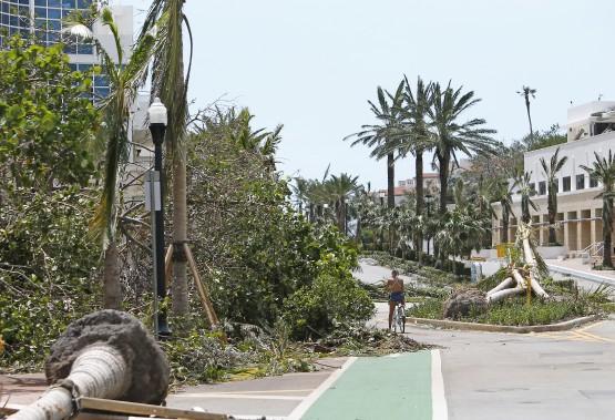 Des arbres déracinés à Miami (AP, David Santiago)