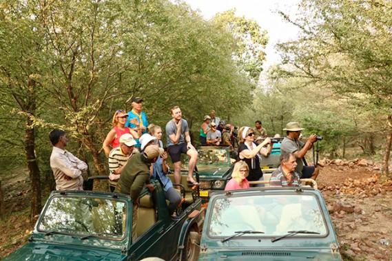 En safari, lorsqu'un jeep a la chance de localiser un tigre, les autres véhicules approchent. (Crédit photo Chantal Lapointe)