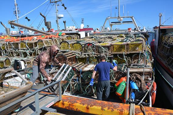 Les pêcheurs chargent ensuite sur leur bateau leurs 273 cages respectives. Si certains ont d'assez gros bateaux pour les embarquer au complet, d'autres devront faire deux voyages le matin du grand jour pour aller les porter en totalité en mer. ()