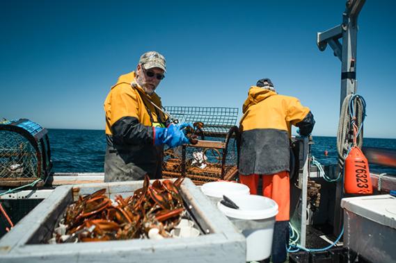 Chaque jour, pendant neuf semaines, on relève les 273 cages pour en sortir le homard tant attendu. ()