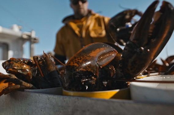 Aux Îles-de-la-Madeleine, la pêche au homard débute au printemps et dure neuf semaines. ()