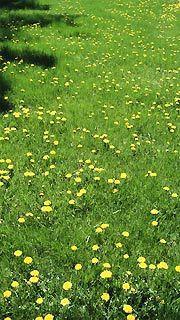 Comment rater sa pelouse cour et jardin - Comment refaire sa pelouse ...