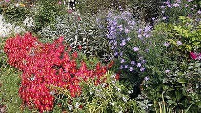 Les plantes se parlent elles entre elles jardiner - Association plantes aromatiques entre elles ...
