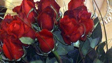 La rose rouge, la fleur des amoureux...