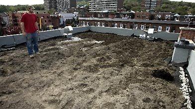 Installation d'un toit vert en ville....