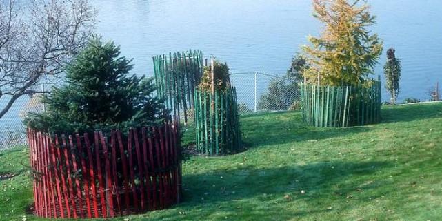La protection hivernale est inutile pour la plupart... (Photo www.jardinierparesseux.com)