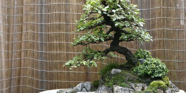 paysages en pot larry hodgson collaboration sp ciale jardiner. Black Bedroom Furniture Sets. Home Design Ideas