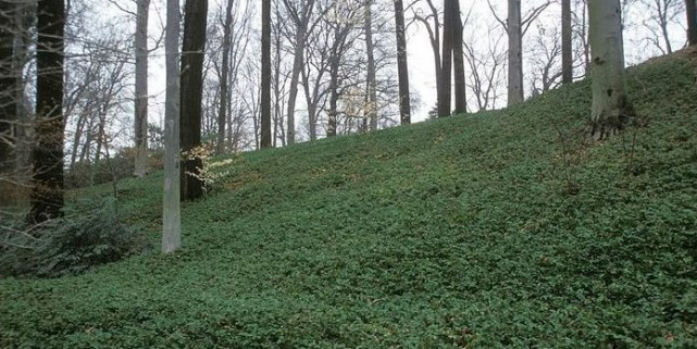 Un tapis v g tal presque sans entretien larry hodgson collaboration sp ciale jardiner - Tapis chauffant pour plante ...