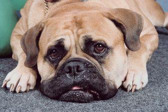 Le nombre d'animaux domestiques abandonnés au Royaume-Uni a bondi de plus de la...