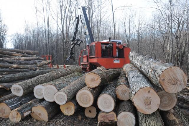 Seulement jeudi, une centaine d'arbres attendaient d'être chargés... (photo Janick Marois)