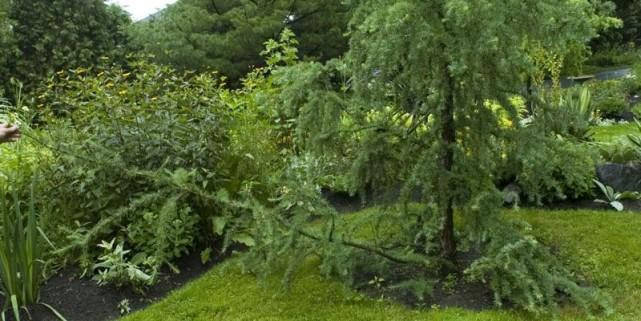 D 39 une greffe l 39 autre pierre gingras jardiner for Autre jardin quebec