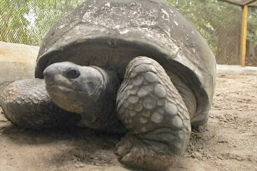 Les tortues sont des animaux qui peuvent vivre... (Photo: Reuters)