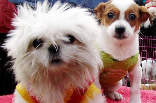 Plus des deux tiers (67%) des propriétaires d'animaux domestiques aux... (Photo: Reuters)
