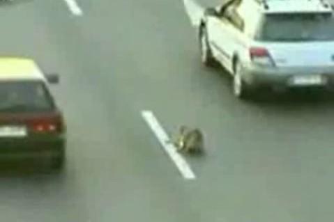 Les Chiliens ont un nouveau héros: un chien errant qui a risqué sa vie pour... (Photo tirée de YouTube)