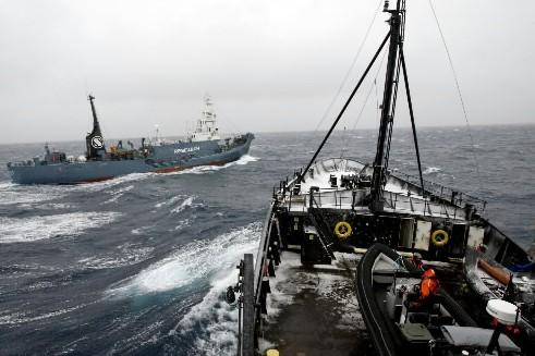 Le Steve Irwin, un bateau de la Sea... (Photo: AFP)