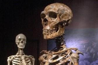 L'homme de Néanderthal a été évincé par l'homo sapiens peu après son arrivée en... (Photo: AP)