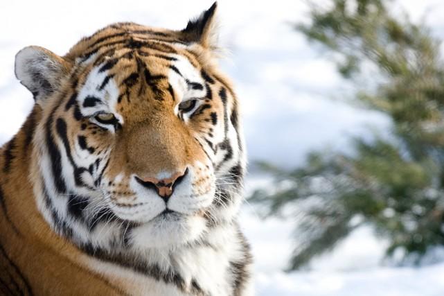 Près des trois quarts de la collection animale... (Photo: Zoo de Granby)