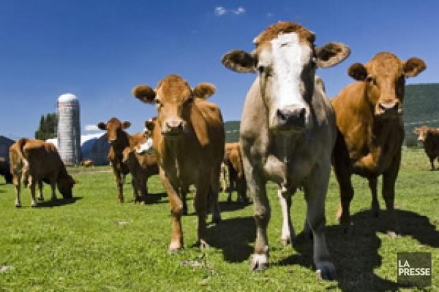 Les producteurs de lait, grâce à la gestion... (Photo: Patrick Sanfaçon, Archives La Presse)
