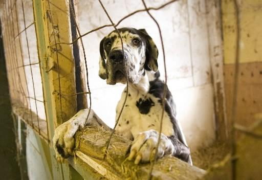 La Société protectrice des animaux en Estrie (SPA-Estrie) fait de l'application... (Archives La Presse)