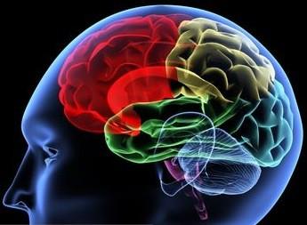 L'insuline a une influence sur la mémoire de...