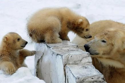 Potentiellement fatal à l'espèce, le réchauffement de la planète a déjà laissé... (Photo: AP)