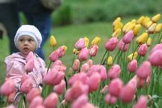 Festival des tulipes... (Archives, LeDroit)