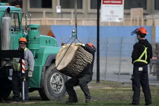 Des employés de la firme Martel ont coupé... (Photo Bernard Brault, La Presse)