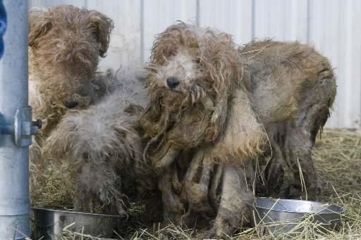 La cruauté envers les animaux soulève une fois... (François Roy, La Presse)