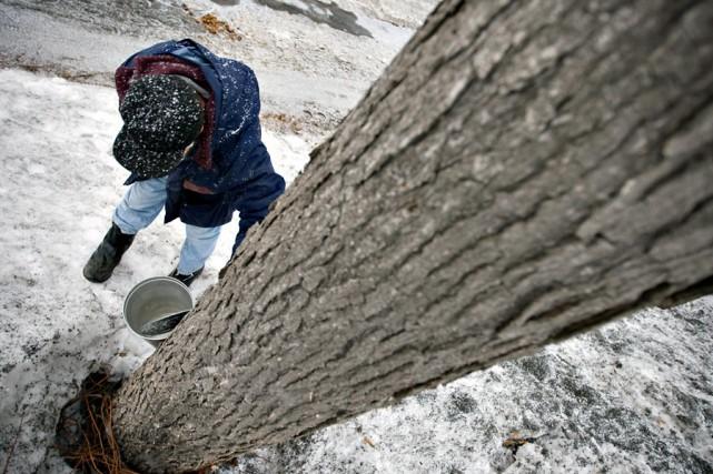 L'eau d'érable coulera probablement encore une dizaine de... (Photo: Ivanoh Demers, La Presse)