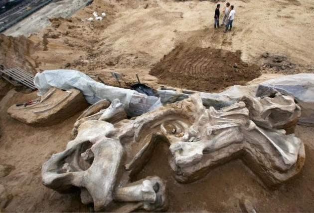 Un squelette de mammouth vieux d'environ un million... (AP)