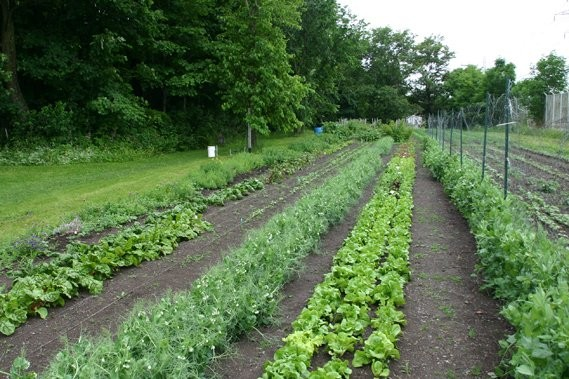 Les Ateliers Terre Au Del Du Jardin Communautaire